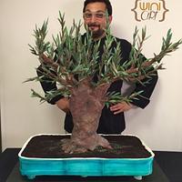 Bonsai olive cake