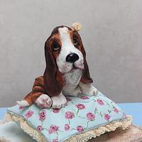3D cake Basset on the cake-pillow. Shabby chic style