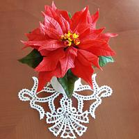 Sugar poinsettia