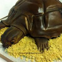 3d Tortoise by Alli Dockree