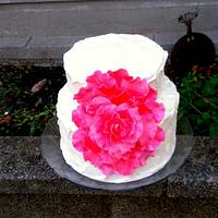 giant rose cake by cheeky monkey cakes