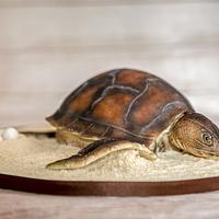 Mummy Turtle