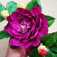 Rubus spectabilis