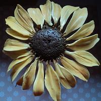 Sunflower (?)