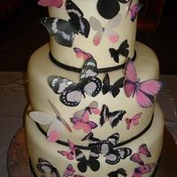 Butterfly Cake by naughtyandnicecakes