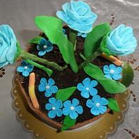 POT CAKE