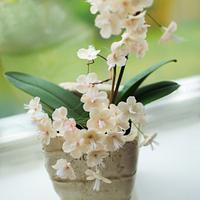 Sugar flower pot