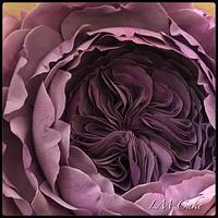 English Sugar Rose
