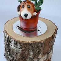 Beagle in a rose plant pot!