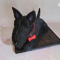 Lola the Scottish Terrier