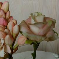 Tube rose + Rose