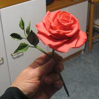 My first rose on wires