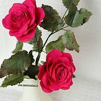 Claret Rose