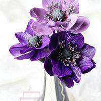 Sugar anemone flowers