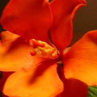 2 HIBISCUS FLOWERS