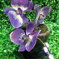 Flower pot orchid