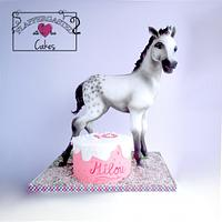 Foal, Icing Smiles cake