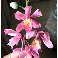 Sugar and Wafer Orchids