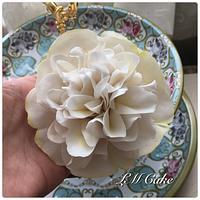 New Basic Camellia Tutorial