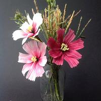 Cosmos and grasses