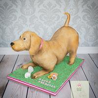 Playful dog cake
