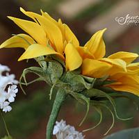 Sunflower Calyx