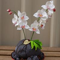 An Orchid THANK YOU cake for a friend