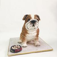 English bulldog cake