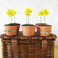 Little pots of spring