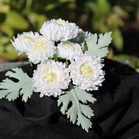 Sugar Chrysanthemum. by Julz Pilkington