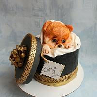 Торт Собачка в коробке.