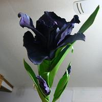 more black iris's