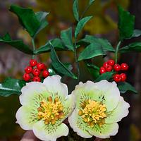 Holly ivy and Hellebore