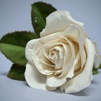 My first 'Realistic' Rose by Angela - A Slice of Happiness