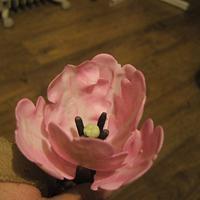 1st ever tulip