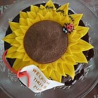 Sunflower cake covered with ganache