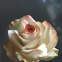 The month of roses...May