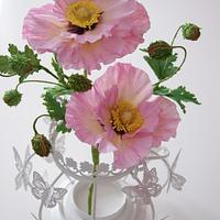 Pale Pink Poppies
