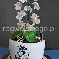 Flower pot with orchids / Tort doniczka z orchideą / storczykiem