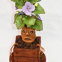 My Mandrake from the the greenhouses of the Hogwarts :)