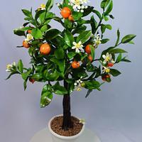 Cake Orange tree