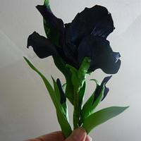 finished black iris's  > no flower cutters used, <