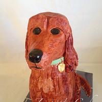 Florence the Red Setter