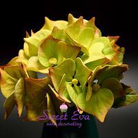 My hydrangea  flower