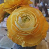 Wafer paper ranculus
