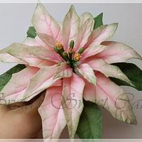 Fondant Poinsettia