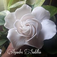 *Gardenia*