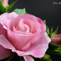 Gumpaste hybrid tea rose