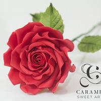 Perfect Wedding Rose