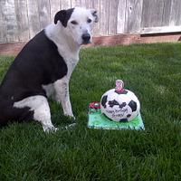 a cake i made for a dog